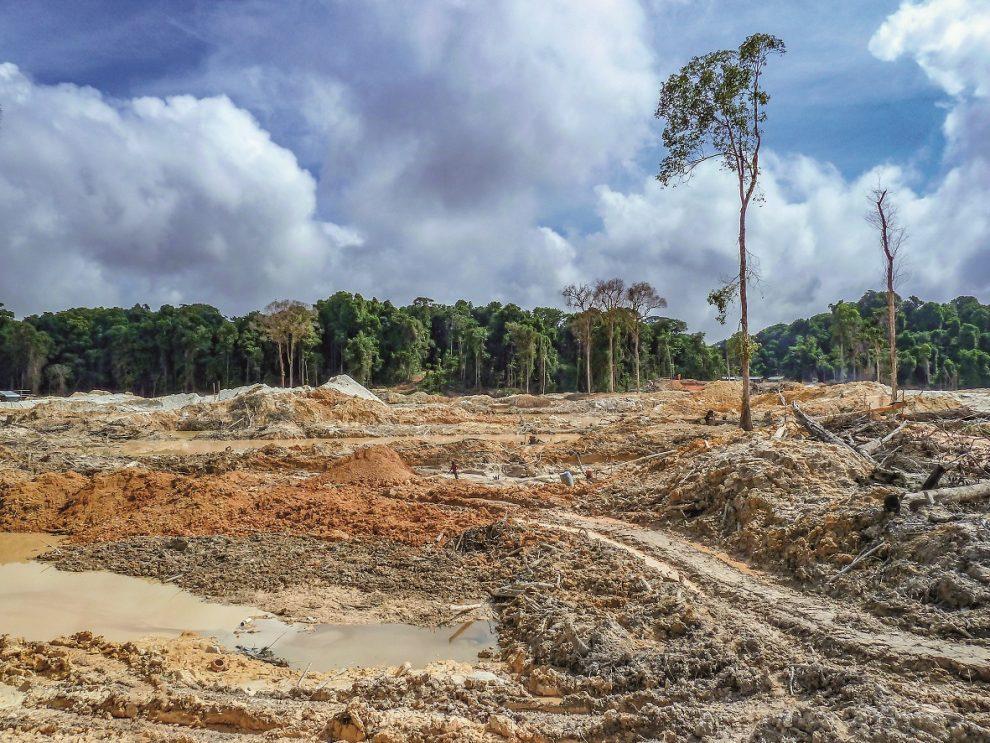 Ničitelé pralesů